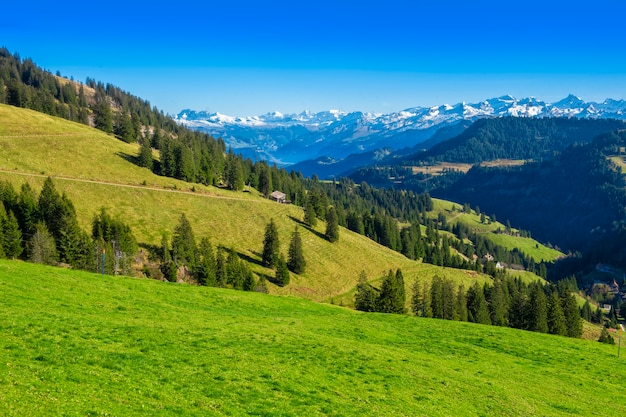Mooie zwitserse berg in de zomer Premium Foto