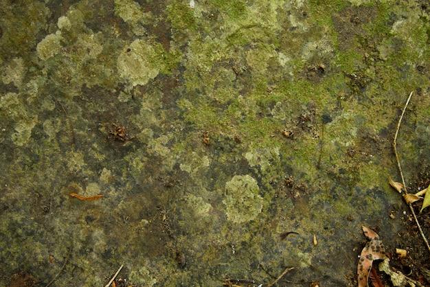 Mos op steen in de natuur Premium Foto