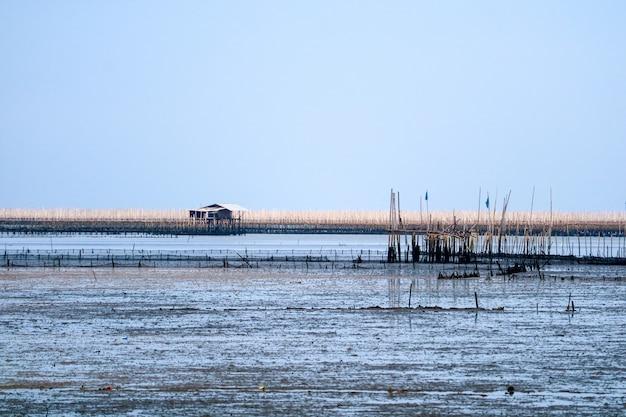 Mosselkwekerij in overzees langs het mangrovebos Premium Foto