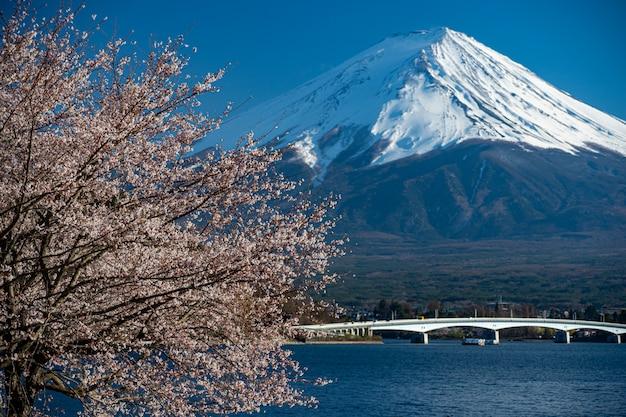 Mt. fuji in de de lentetijd met kers komt bij kawaguchiko fujiyoshida, japan tot bloei. Premium Foto