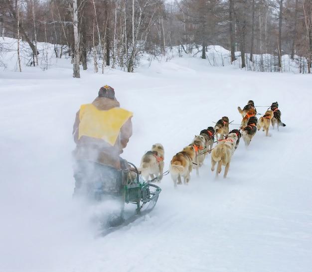 Musher verstopt zich achter slee bij sledehondenrace op sneeuw in de winter Premium Foto