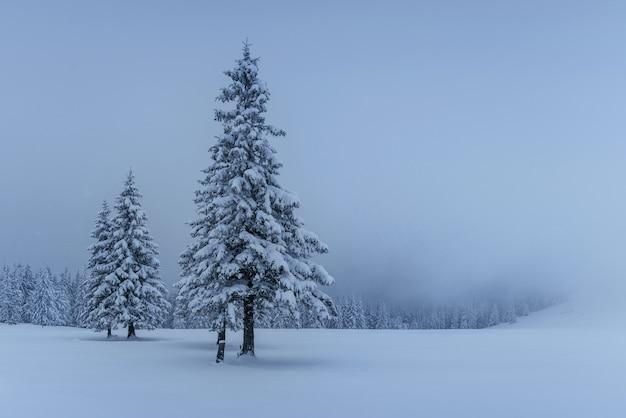 Mysterieuze winterlandschap, majestueuze bergen met sneeuw bedekte boom. foto wenskaart. karpaten oekraïne europa Premium Foto