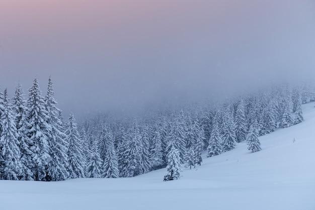 Mysterieuze winterlandschap, majestueuze bergen met sneeuw bedekte boom. Gratis Foto