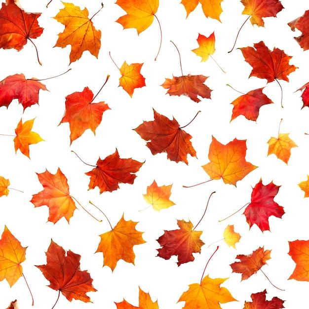 Naadloze patroon van natuurlijke herfstbladeren vallen geïsoleerd Premium Foto