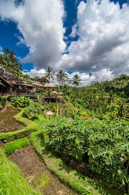 Nabij het culturele dorp ubud ligt een gebied dat bekend staat als tegallalang en dat beschikt over de meest dramatische terrasvormige rijstvelden van heel bali. Gratis Foto