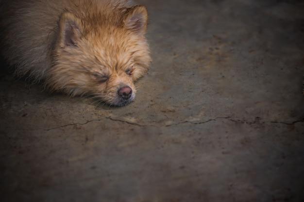 Nat en doorweek bruine hond neerleggen met de relaxstemming op de vuile cementen vloer Premium Foto