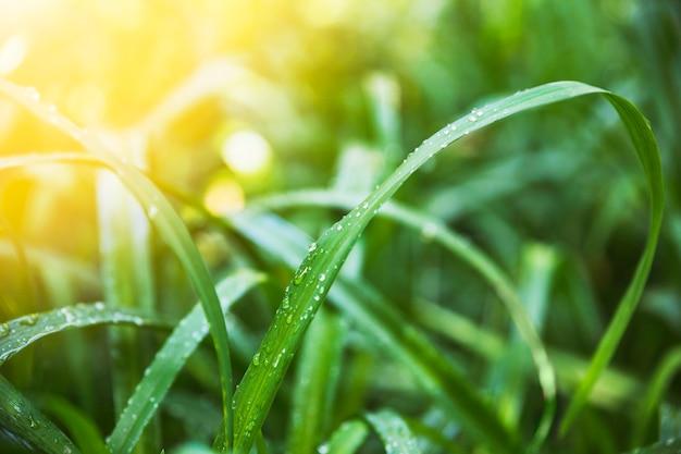 Nat gras op zonnige dag Premium Foto