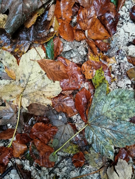 Natte herfstbladeren achtergrond Gratis Foto