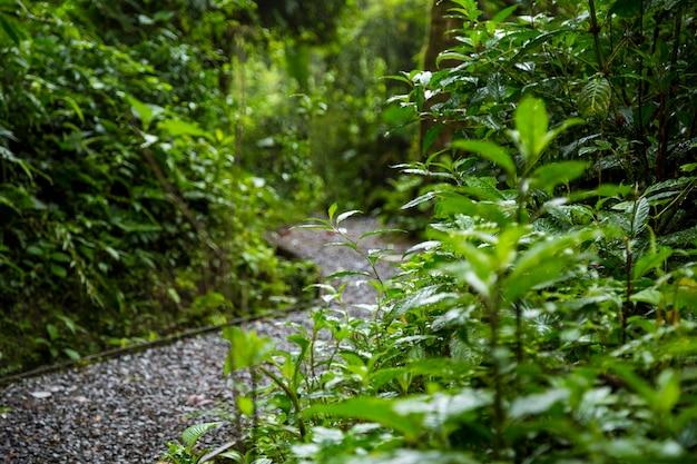 Natte weg in regenwoud na regen Gratis Foto