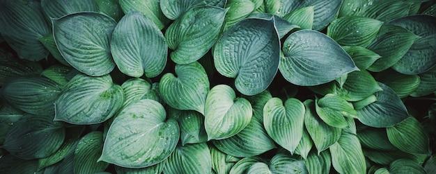 Natuur concept. bovenaanzicht groene bladerentextuur. Premium Foto