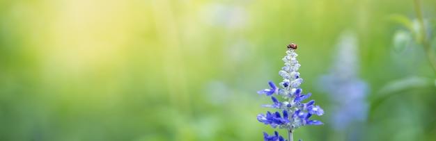 Natuur weergave van klein lieveheersbeestje op paarse lavendel bloem met groene natuur wazig achtergrond met kopie ruimte gebruiken als achtergrond Premium Foto