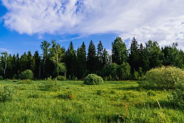 Natuurlijk landschap met een bos van berken en sparren en een groene weide op een zomerdag Premium Foto