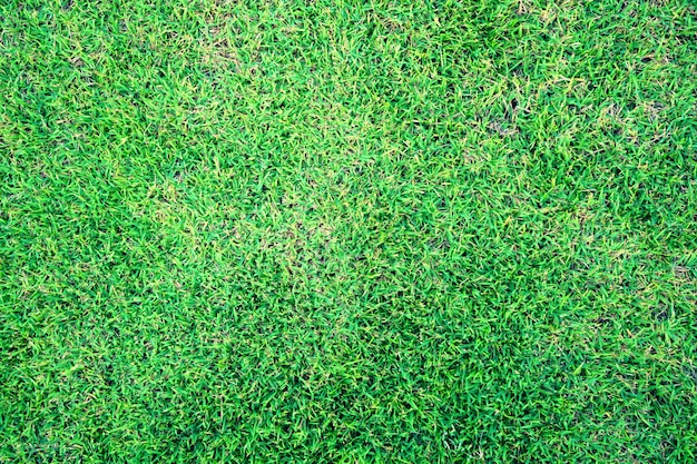 Natuurlijk vers de textuur van de achtergrond lente groen gras close-up Premium Foto