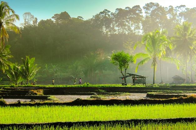 Natuurlijke schoonheid van indonesië met luchtfoto's verbazingwekkende wolken Premium Foto