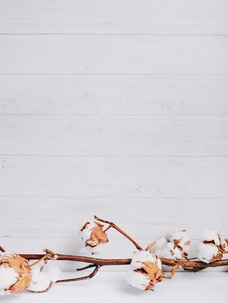 Natuurlijke stam van katoenen bloemen die ruw katoen produceren tegen een houten plank Gratis Foto