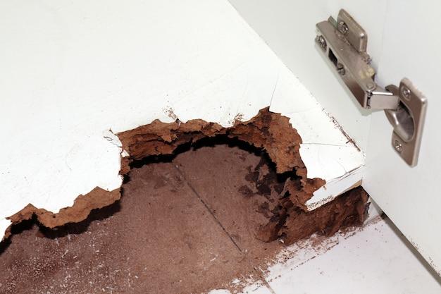Nest-termiet, beschadigd hout gegeten door termiet of witte mier Premium Foto