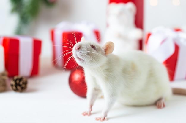 Nieuwjaar . leuke binnenlandse rat in het decor van een nieuwjaar. symbool van het jaar 2020 is een rat. Premium Foto