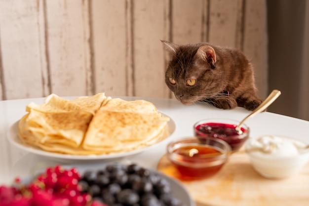 Nieuwsgierige bruine kat die smakelijke pannenkoeken ruikt terwijl hij over tafel bukt, geserveerd met zelfgemaakt eten voor het ontbijt in de keuken Premium Foto