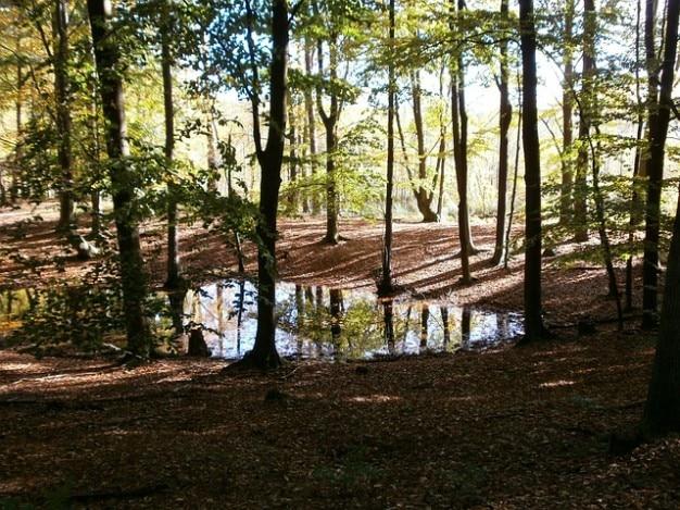Oktober schorfheide zwembaden landschap herfstbos Gratis Foto
