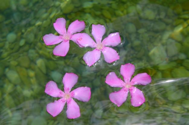 Oleander roze bloemen drijvend in natuurlijk zoet water Premium Foto