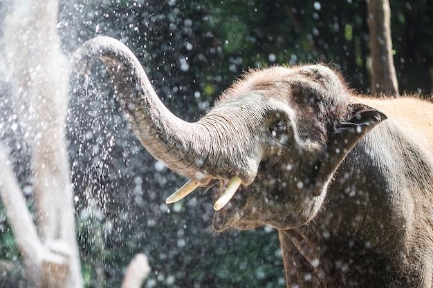 Olifant spelen met water Gratis Foto