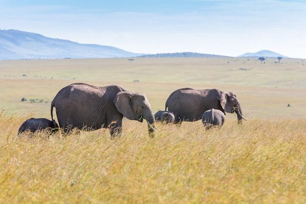 Olifantenfamilie die in de savanne lopen Gratis Foto
