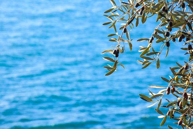 Olijfboom met bladeren Premium Foto