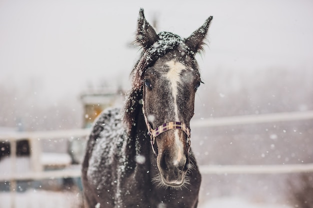 Omweg van engels racepaard Premium Foto