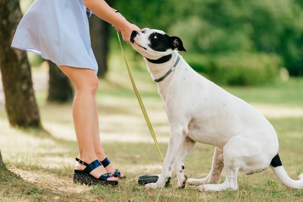 Onbekend meisje in blauwe jurk veel plezier en spelen met haar mannelijke witte hond buiten in de natuur. Premium Foto