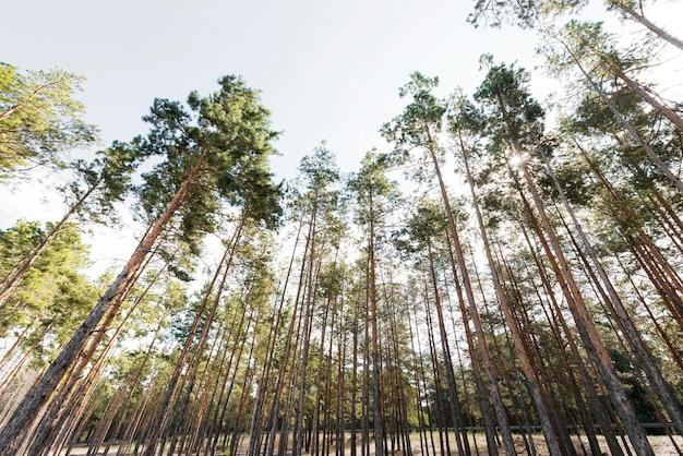 Onderaanzicht bomen bij daglicht Premium Foto