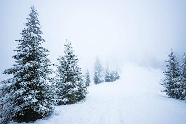 Onderaanzicht enorme chique besneeuwde dennenbomen groeien midden op een heuvel met sneeuw Premium Foto