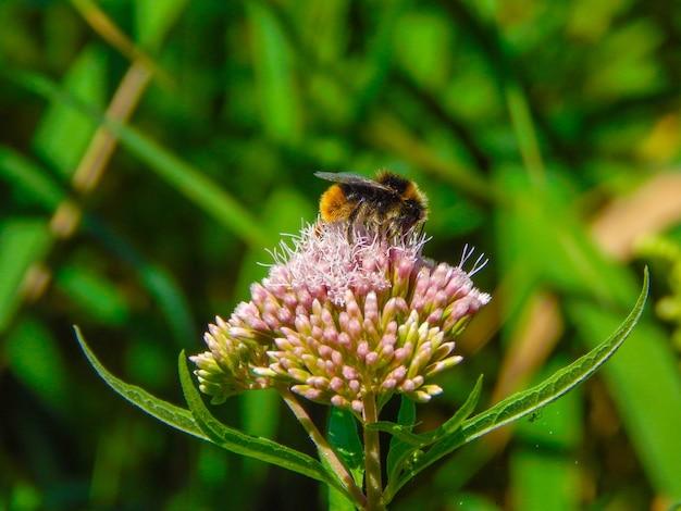 Ondiepe focus shot van een honingbij die nectar van een bloem verzamelt Gratis Foto