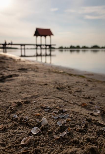 Ondiepe focus shot van schelpen op zand met een wazige oceaan Gratis Foto