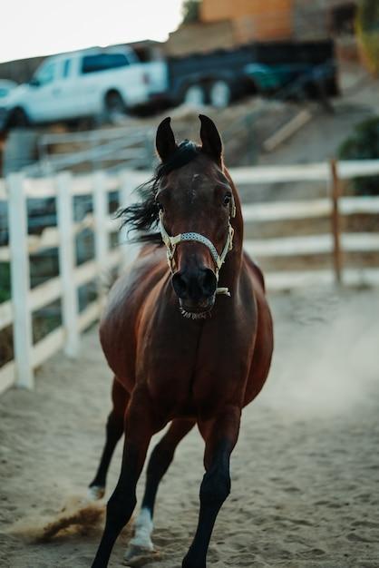 Ondiepe focus verticale opname van een bruin paard dat een harnas draagt dat op een zanderige grond loopt Gratis Foto
