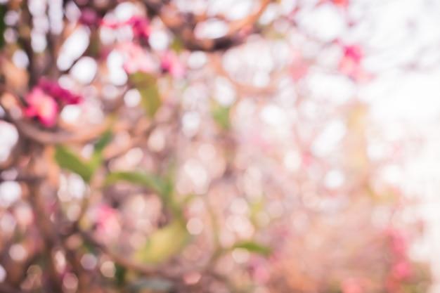 Onduidelijk beeld bokeh van mooie roze tropische bloem en bloemblaadjes plumeria bloembloesem Premium Foto