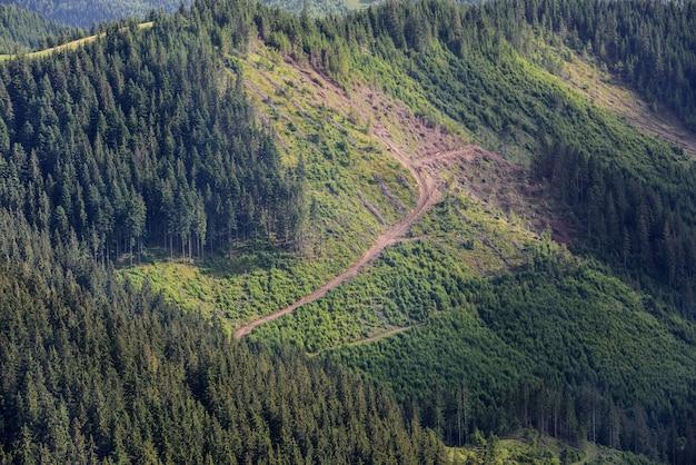Ontbossing. snijd dennenbomen aan de kant van een berg, ecologische ramp. Premium Foto