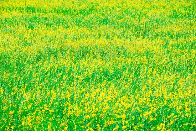Ontspannend in een weide in de de zomerzon, de lentetijd. Premium Foto