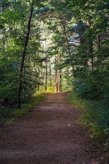 Onverharde weg in het midden van het bos op een zonnige dag met bos bomen op de achtergrond Gratis Foto