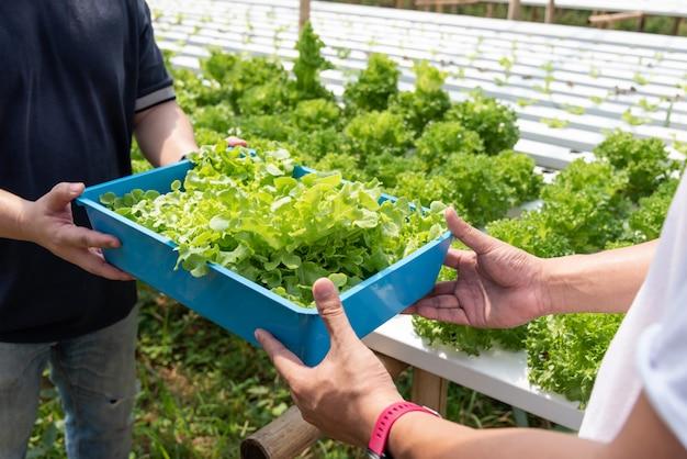Oogst hydrocultuur groenten, niet giftig. geplant door water geen aziatische stijl van de grond mooie boom. Premium Foto