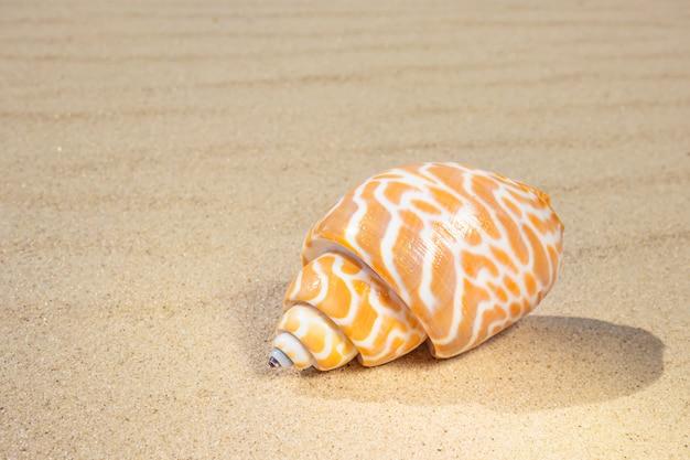 Op het zand liggen verschillende schelpen. het concept van zomervakantie op zee. zandstrand. Premium Foto