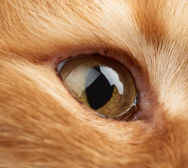 Open geel oog van een rode kat Premium Foto