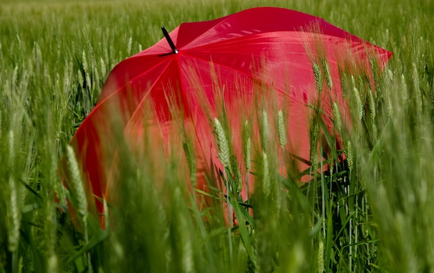 Open rode paraplu in het groene gras Gratis Foto