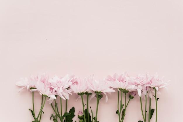 Opgeheven mening van roze bloemen op gekleurde achtergrond Gratis Foto