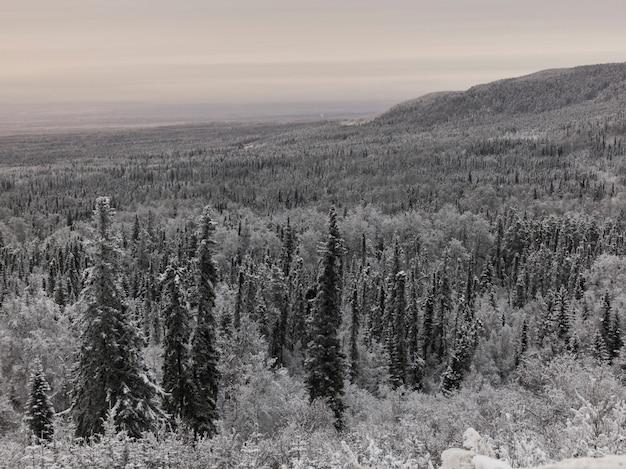 Opgeheven mening van vorst behandelde bomen in een bos, de weg van alaska, noordelijke rockies regionale municipa Premium Foto