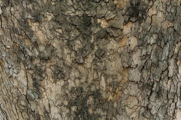 Opluchting textuur van de bruine schors van een boom close-up Gratis Foto
