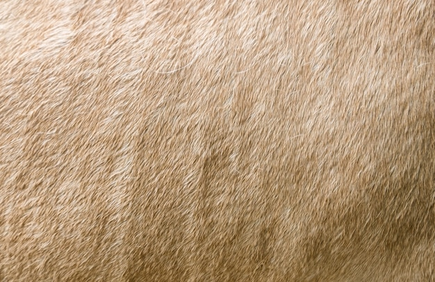 Oppervlakte vacht crème paard Premium Foto