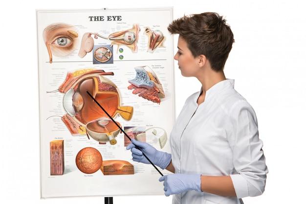 Opticien of oogarts vertelt over de structuur van het oog Gratis Foto