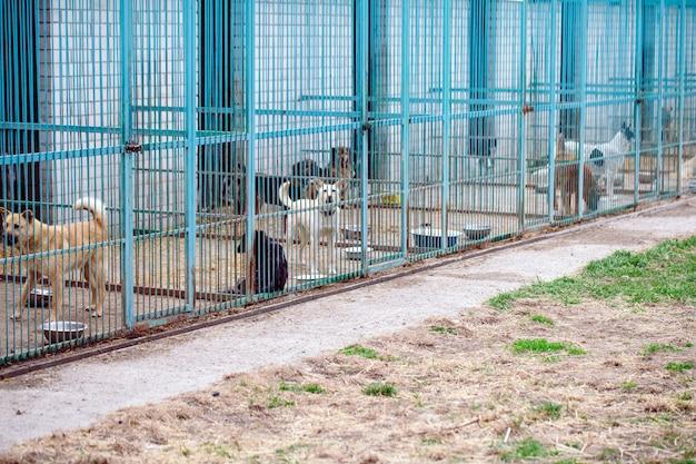 Opvang voor zwerfhonden. Premium Foto
