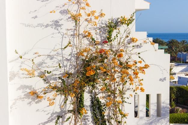 Oranje bloemen op de muur van het huis Premium Foto