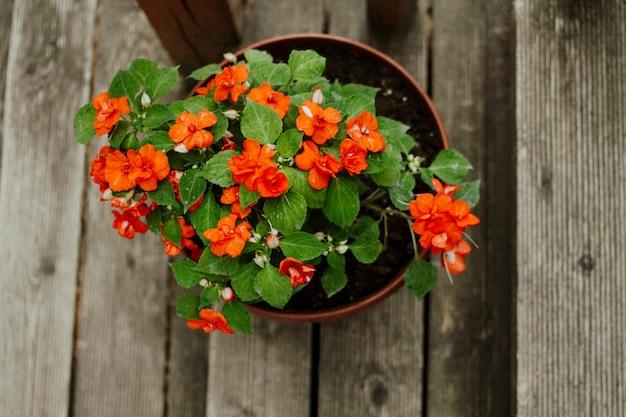 Oranje huisbloem ingemaakt op de treden Premium Foto